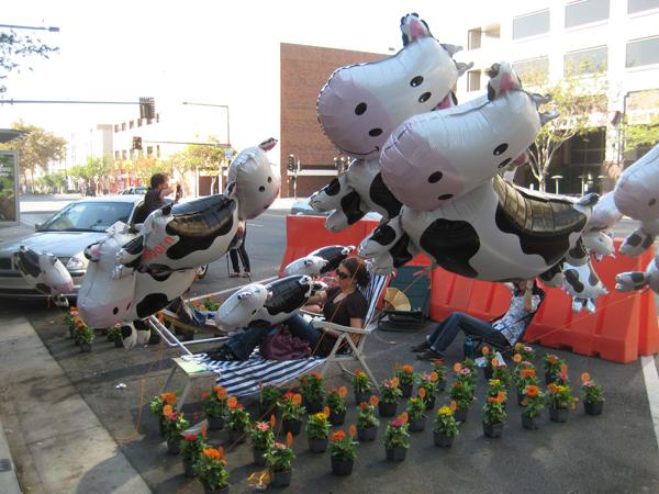 Cows01